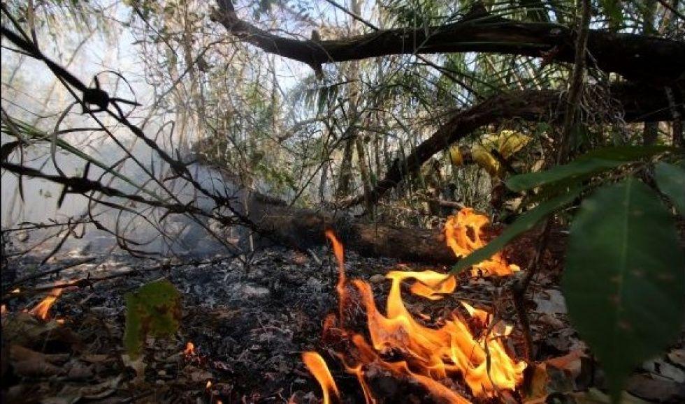 Paraguay envía voluntarios al Pantanal para evitar extensión del fuego del Amazonia
