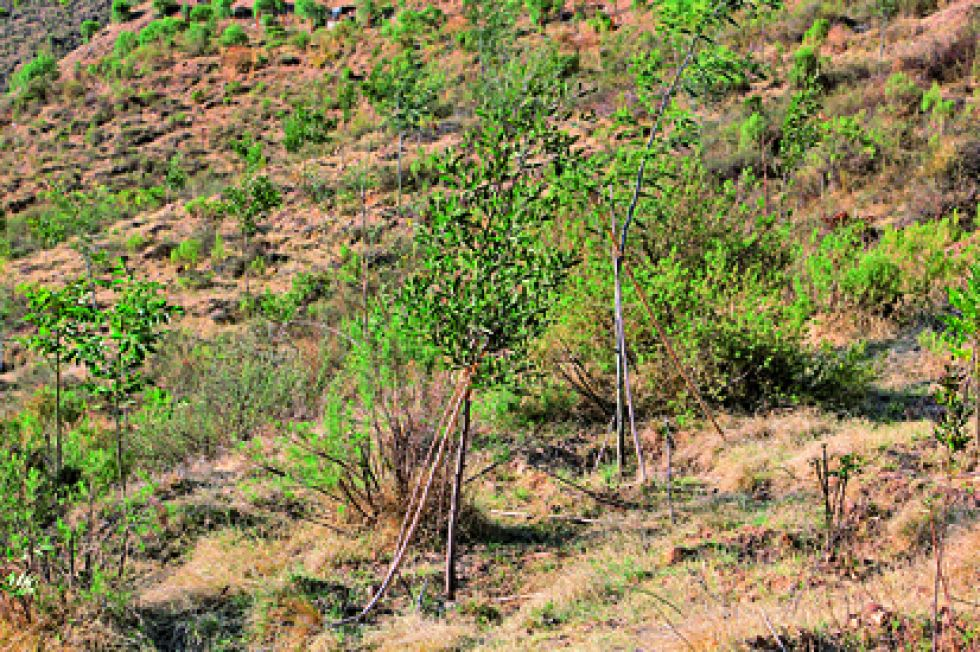 PLANTAS. El cuidado de los árboles en el sector se encuentra a cargo de dos vecinos..