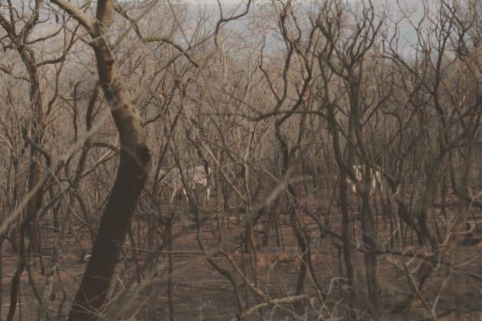 Mira las imágenes de la devastación del área forestal de Roboré