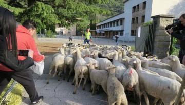 Ovejas son inscritas en escuela para evitar cierre de una clase
